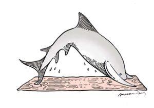 downward facing shark clean layers_small