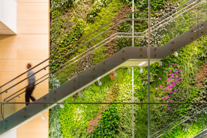 Living Walls Bring Health Benefits to Urban Areas