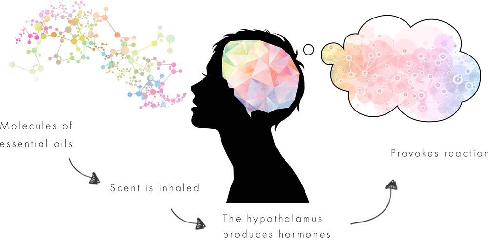 MediScent: Fragrance Gets a Wellness Makeover | Global