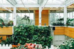 Biophilic Design Trends